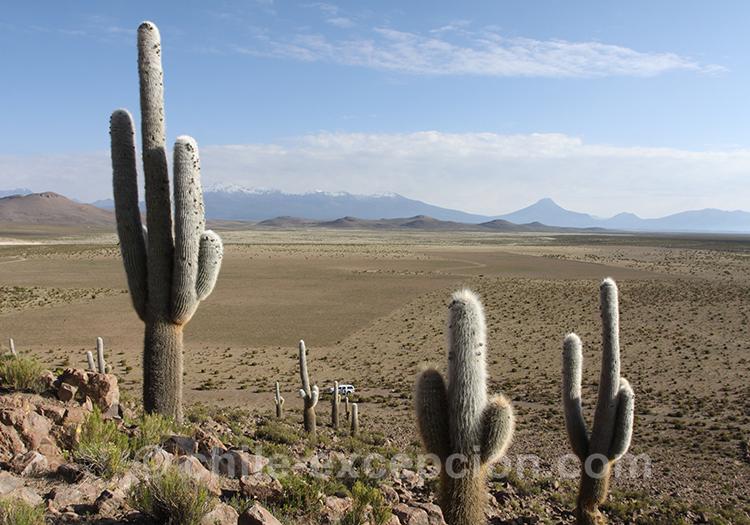 Cardon, où en voir au Chili avec l'agence de voyage Chile Excepción