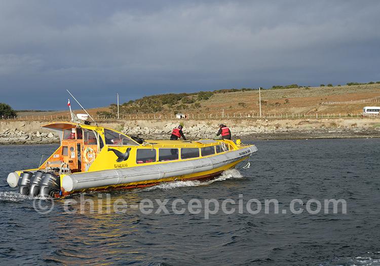 Excursion nautique à partir de Punta Arenas, île Magdalena