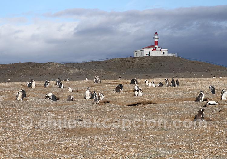 Excursion nautique jusqu'au monument naturel Los Pinguinos avec vue sur le phare au loin