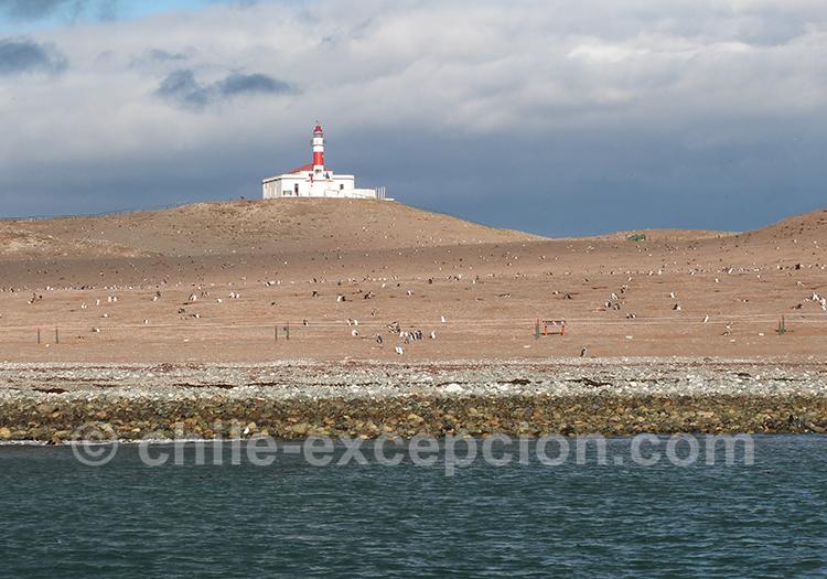 L'arrivée sur l'île Magdalena, Chili