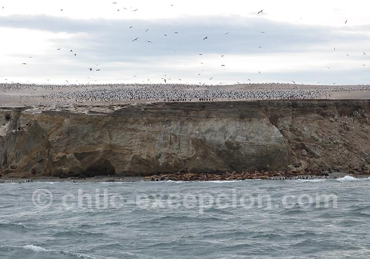 L'arrivée sur le monument naturel Los Pinguinos, Chili