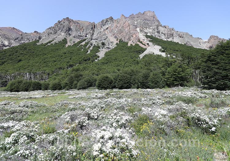 Parc national Cerro Castillo