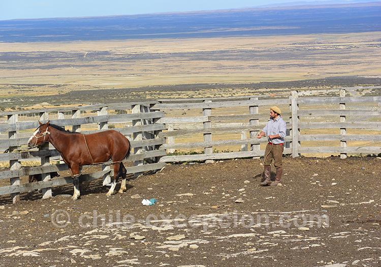 Dressage de chevaux à l'estancia Cerro Guido, Torres del Paine