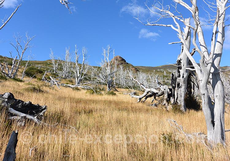 Végétation sur le sentier Mirador Cuernos, Chili