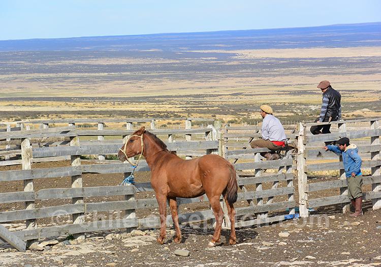 Les chevaux de Patagonie, Chili