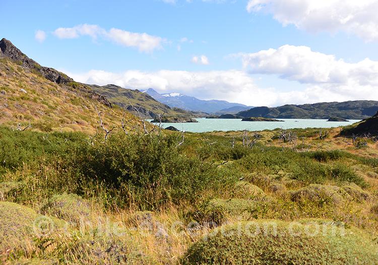 Paysages de Patagonie sur le sentier qui mène au Mirador Cuernos, Chili