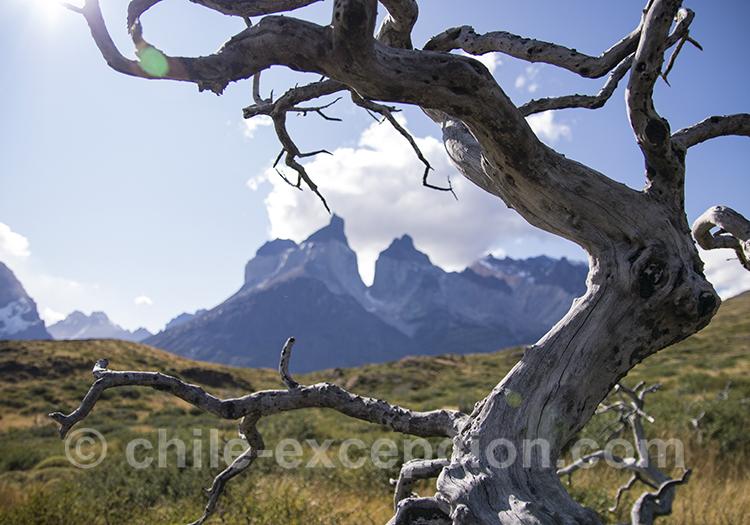 Découvrir le parc Torres del Paine, Chili