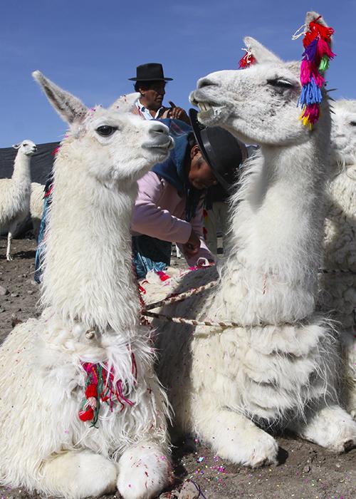 Fête de La Floraison au Chili