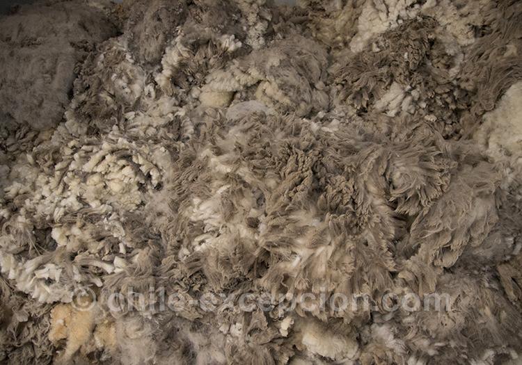 Tas de laine après la tonte des moutons de patagonie