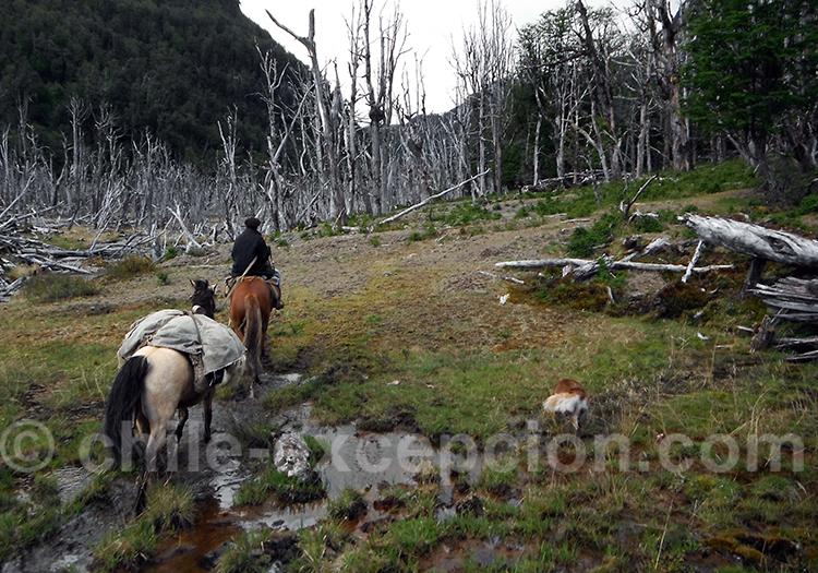 Raid équestre en Patagonie