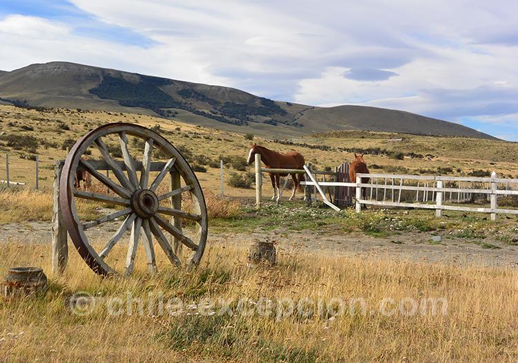 Décor de la Patagonie du sud du Chili, avec les chevaux dans les prés
