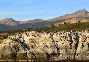 Fjord Última Esperanza, cormorans