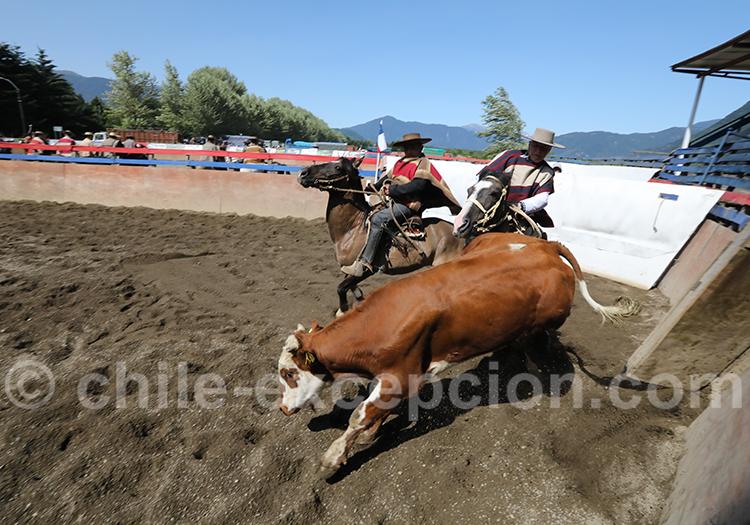 Collera en action au championnat de Rancagua