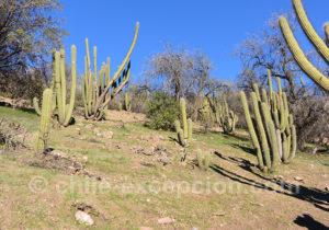 Paysages du Chili au milieu des cactus