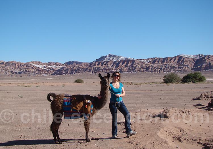 Promenade avec les lamas à San Pedro de Atacama