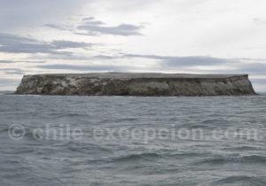 île Marta, détroit de Magellan