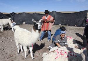 Rituels de l'Altiplano andin
