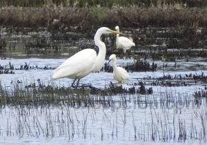 Observation aviaire sur l'étang de Paredones