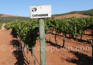 Cépage Carménère, viña Bouchon