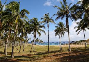Palmiers à Anakena