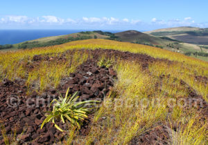 La flore de l'île de Pâques