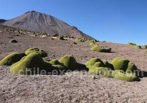 Un des sommets versant nord du Taapaca