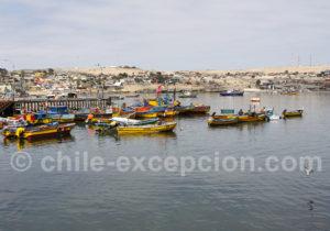 Visite de Caldera, port de pêche de la côte Atacama