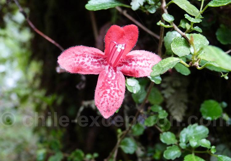 Flore de la route Australe