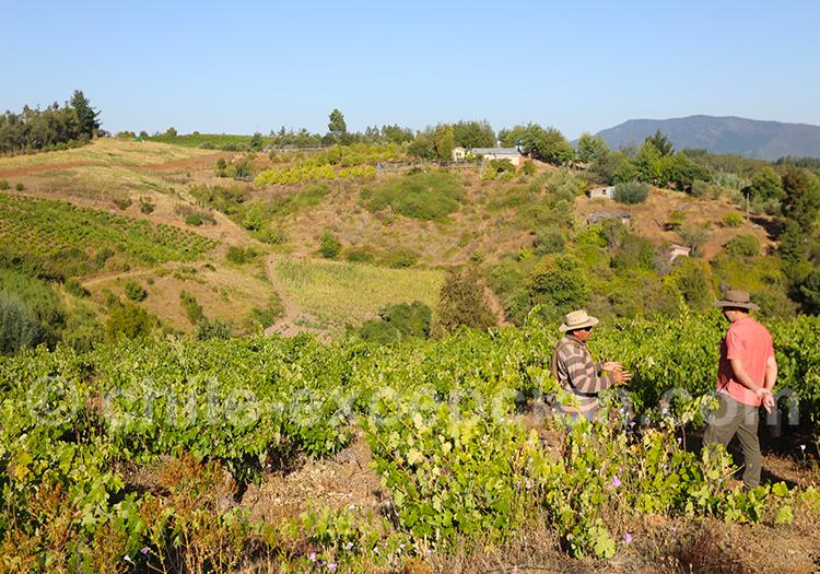 Viña Castellon, vallée Itata