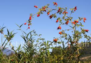 Flore de Route Australe chilienne