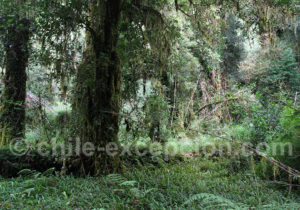 Rando guidée parc Tagua Tagua