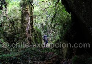 Trekking parc Tagua Tagua