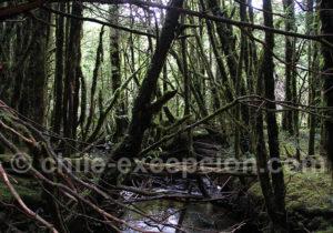 Forêt primaire parc Tagua Tagua