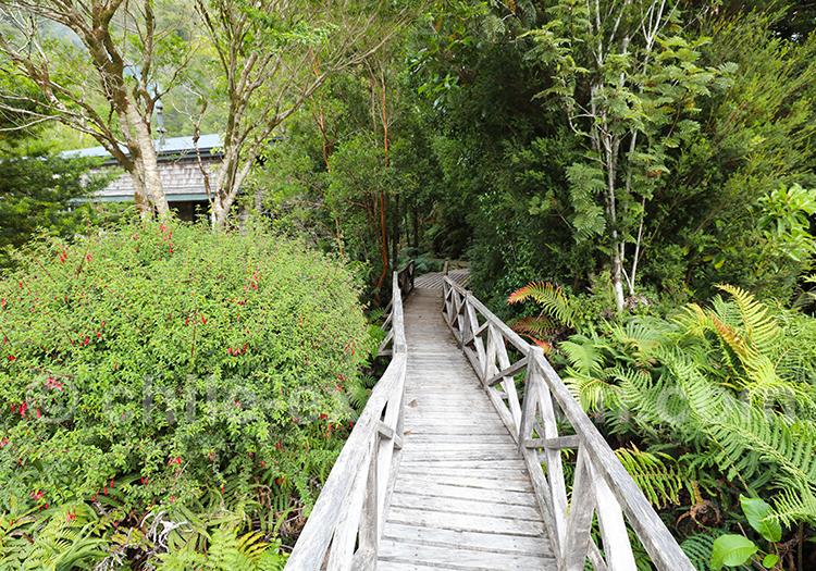 Trekking dans le parc Pumalin