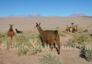 Désert d'Atacama