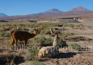 Voyage dans l'Atacama