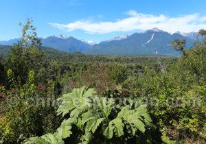 Végétation typique de la Carretera Austral en Patagonie