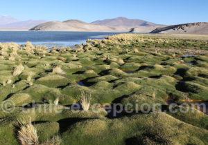 Bofedal laguna Santa Rosa, région Atacama