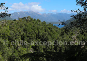 Lac Blanco, Pumalin