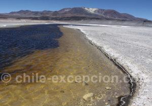 Lagunes et salars du parc Nevado Tres Cruces