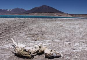 Sur les rives de la laguna Verde, Nevado Tres Cruces
