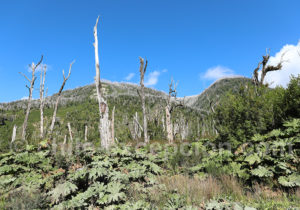 Parque Nacional Pumalín Douglas Tompkins
