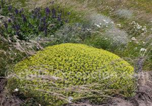 Flore Typique du sud Chili