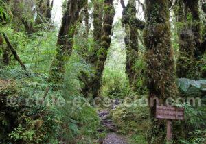 Sentier Cascadas parc Pumalin