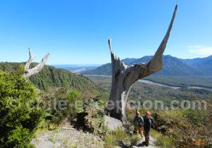 Arbres morts sur le volcan Chaitén