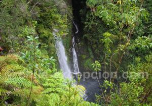 Pumalin, protection de la biodiversité