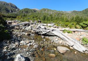 Ruisseau sur volcan Chaitén