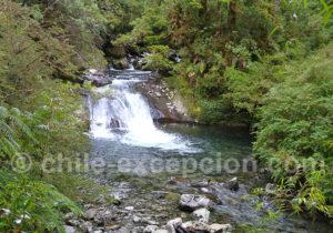 Sanctuaire naturel de Pumalin