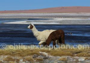 Voyage dans l'Altiplano