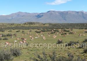 Safari photographique animalier au Chili